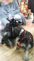 mini top hats for dogs, a new line we're not sure??